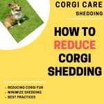 How Do I Stop My Corgi From Shedding?