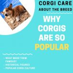 Why Are Corgis so Popular? (6 Reasons for their Rise to Fame)