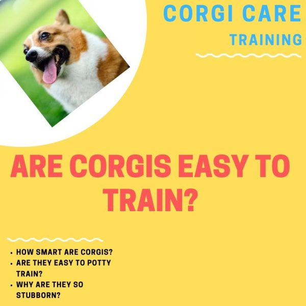 Are corgis easy to train?