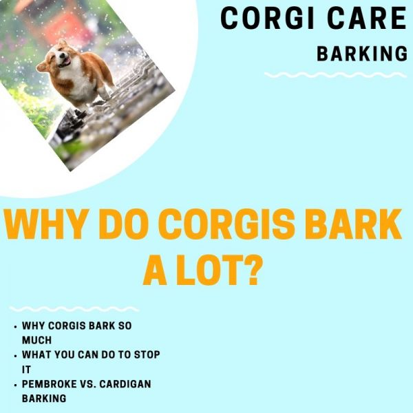 Do corgis really bark a lot?