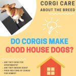 Are Corgis Good House Dogs? (Things You Should Know)