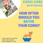 How Often Should I Bathe My Corgi? (And How Do I Do It?)