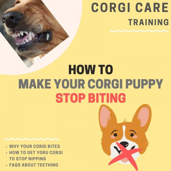 How to stop corgi puppy from nipping.