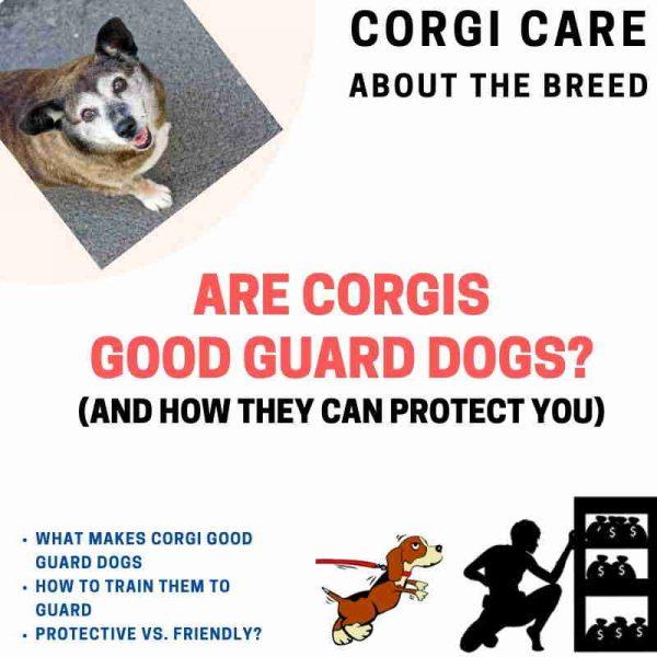 Are corgis good guard dogs?