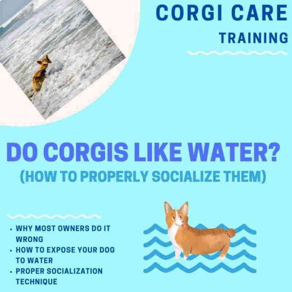 How to make corgi swim.