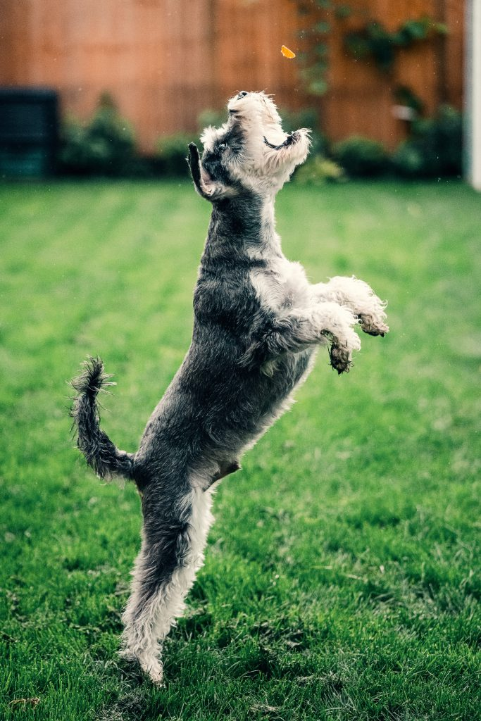A dog on lawn.